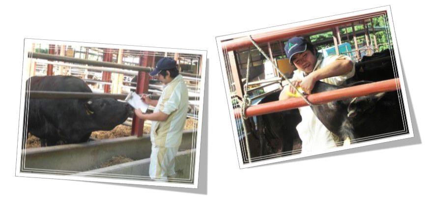 牧場 健康管理
